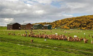 在农村养殖可以占用基本农田建养殖场吗?