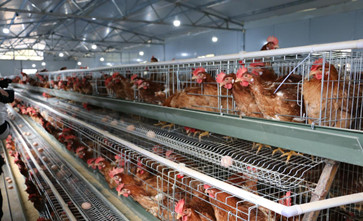 以环境保护的名义对养殖场进行无补偿征收拆迁合法吗