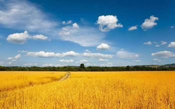 严厉打击非法占用永久基本农田行为,新增宅基地不得占用基本农田
