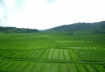 农业农村部回应:农村征地,两项权利必须得到保障